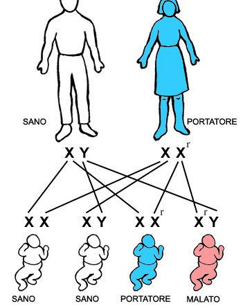 Le modalità di trasmissione delle malattie genetiche