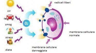 Specie reattive dell'ossigeno-ROS e infertilità maschile