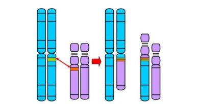 La coppia e l'infertilità per cause genetiche